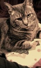 Mona the cat