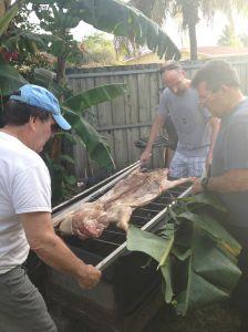 Making sure the pig is okay.