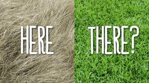 blog-pics-1200x675-greener-grass